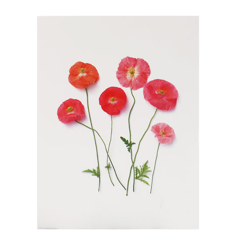 Blank Folding Greeting Card in Pink, Red, and Orange Poppies