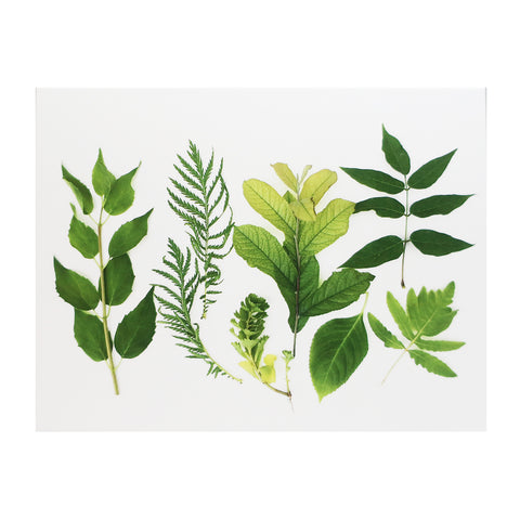 Blank Folding Greeting Card in Various Shades of Green Leaves Of Summer