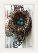 """3 Blue Eggs"" by Steve Head (Original Photography)"