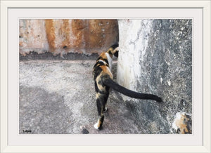 Calico and Concrete by Steve Head (Original Photography)