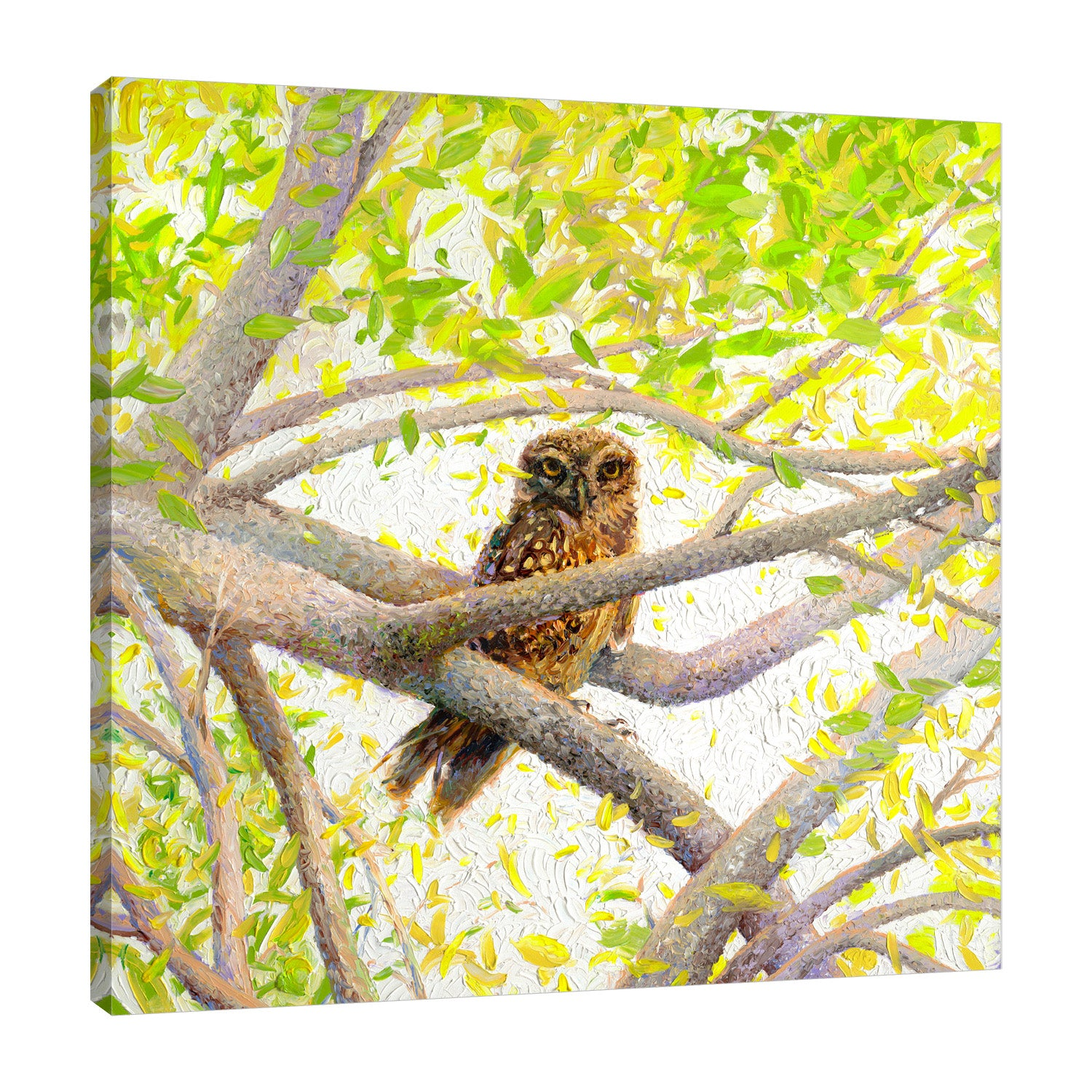 Indian Owl Spotted | Canvas Print