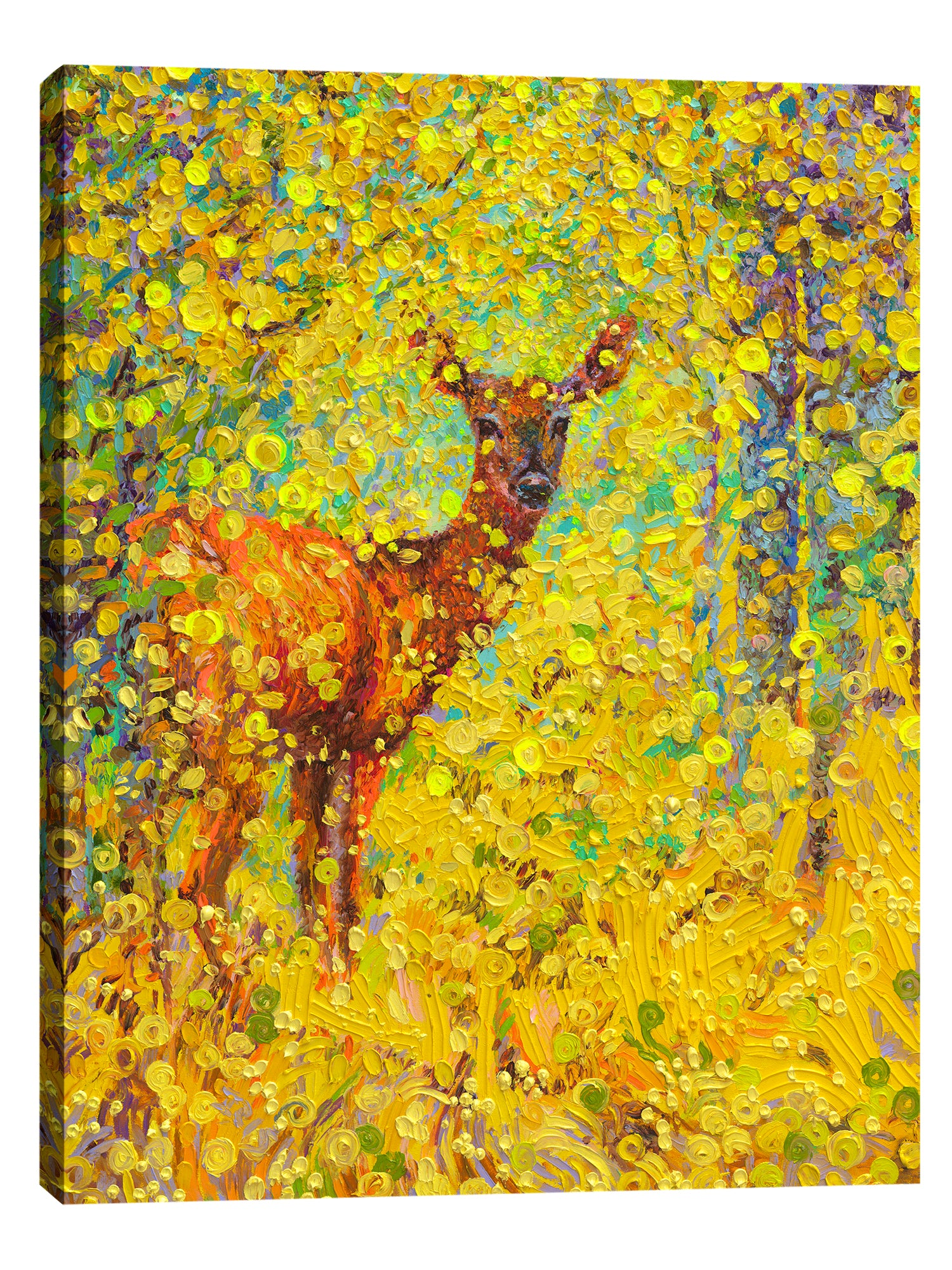 White Tail Deer | Canvas Print