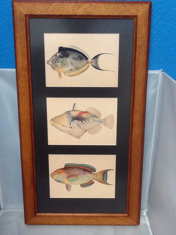 Framed Reproduction from Hawaii