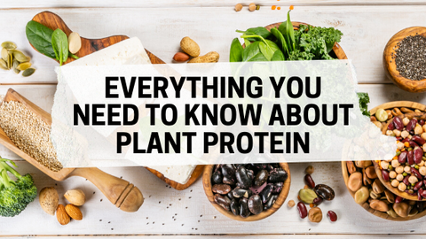 Everything You Should Know About Plant Protein