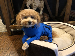 Canine Comfy, protective dog clothing including dog bodysuit and dog booties, the comfy alternative to the cone of shame