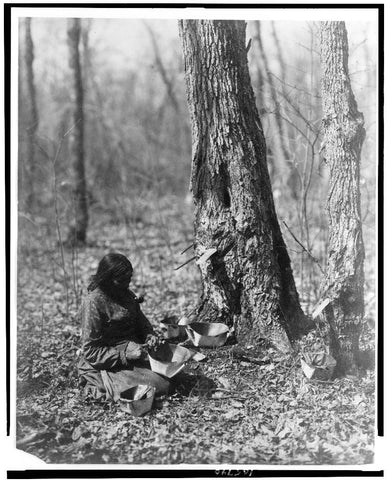 """Indian woman tapping maple sap""; Reed, Roland, 1864-1934, photographer; 1908; courtesy of Library of Congress"