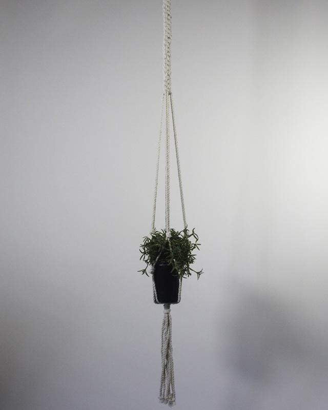 Love for Nica Bluefields Macrame Plant Holder in Natural White