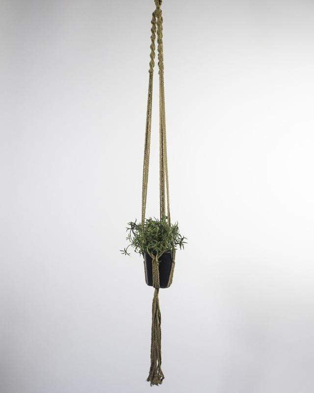 Love for Nica Santana Macrame Plant Holder in Khaki