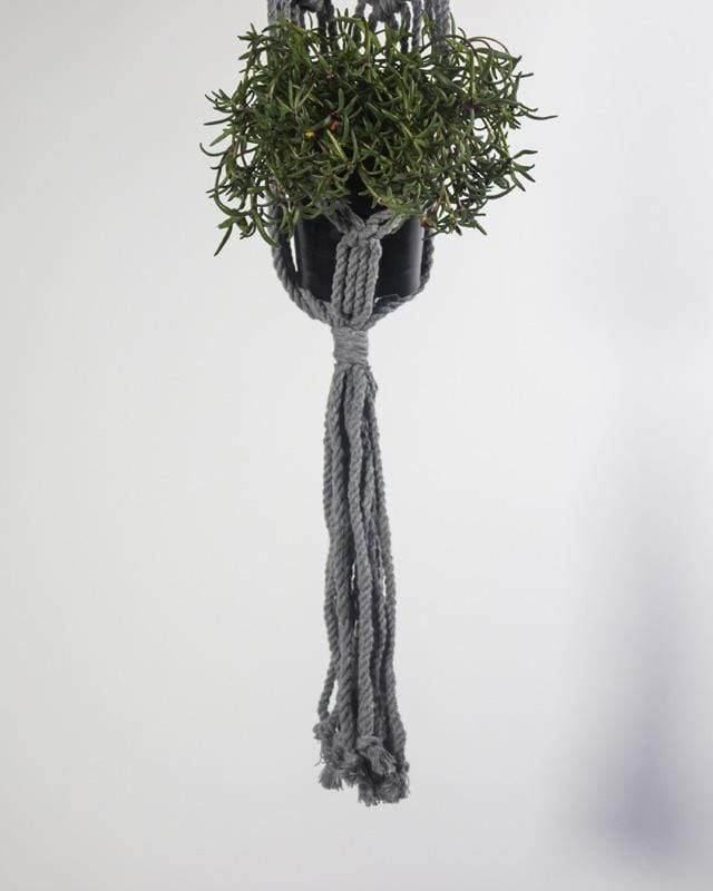 Love for Nica Somoto Macrame Plant Holder in Gray