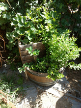 Half Wine Barrel 2-Level Planter