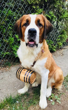 St Bernard Barrel - 2
