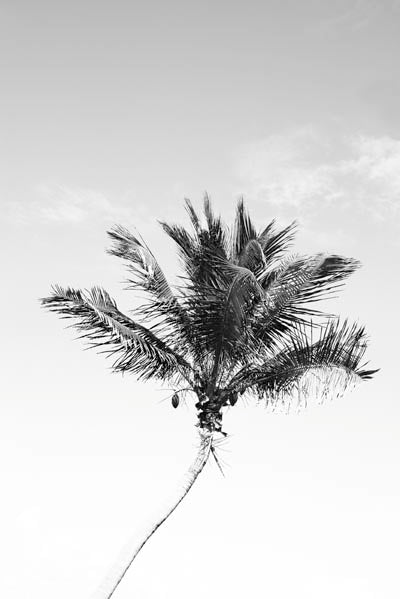 Palm Trees 7