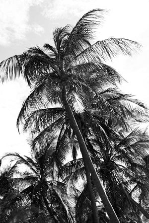 Palm Trees 8