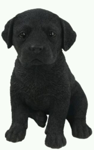 Sitting Labrador Puppy