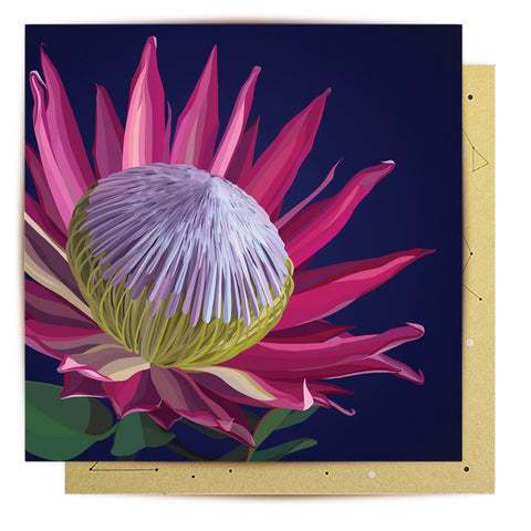 Lalaland - King Protea Greeting Card