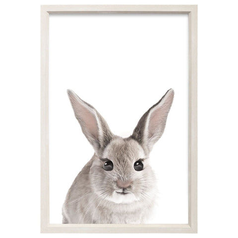Splosh - Baby Collection, Baby Bunny Framed Canvas