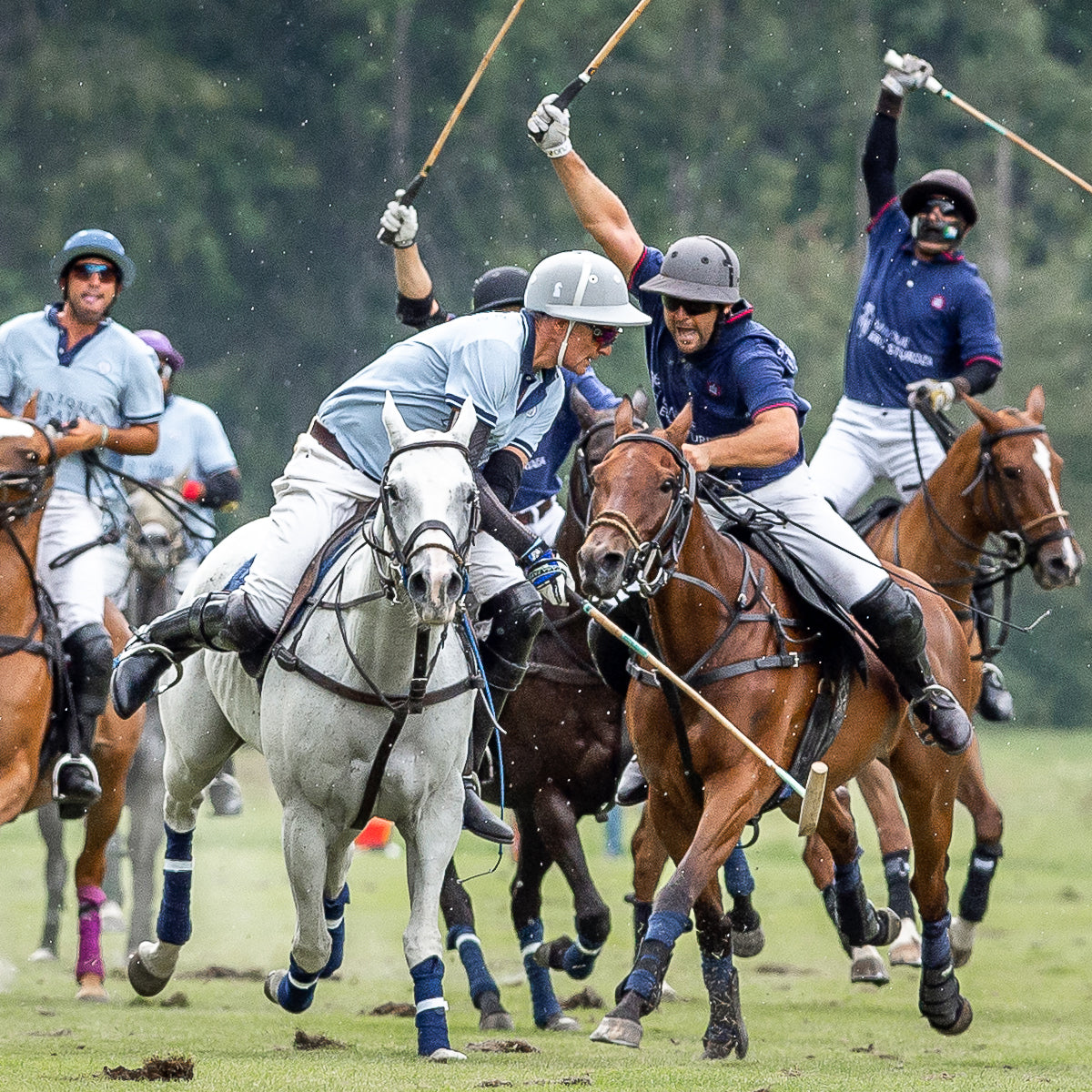 KA/NOA newsletter, August 2019 -- Polo, polos and tango!