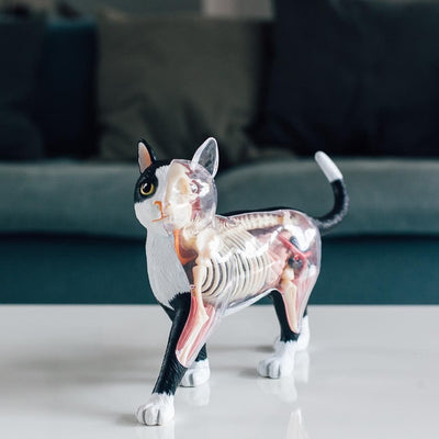 Fame Master 4D Vision Cat Anatomy Model 20cm
