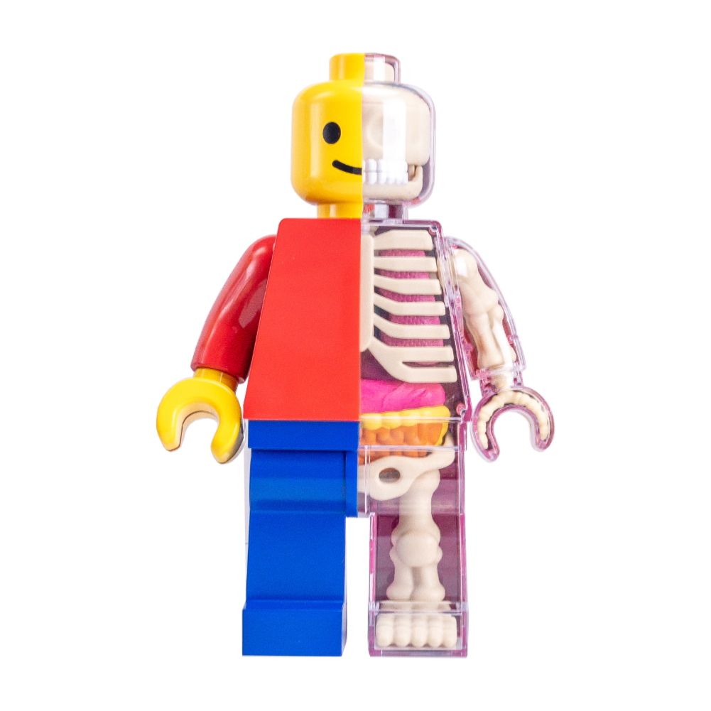 Jason Freeny Brick Man anatomy figure, classic