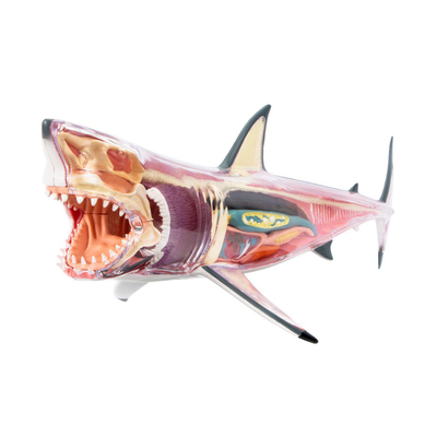 Fame Master Three-Dimensional Puzzle Anatomy White Shark 28cm