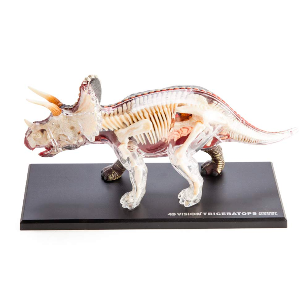 Fame Master Three-Dimensional Puzzle Anatomy Triceratops 37cm