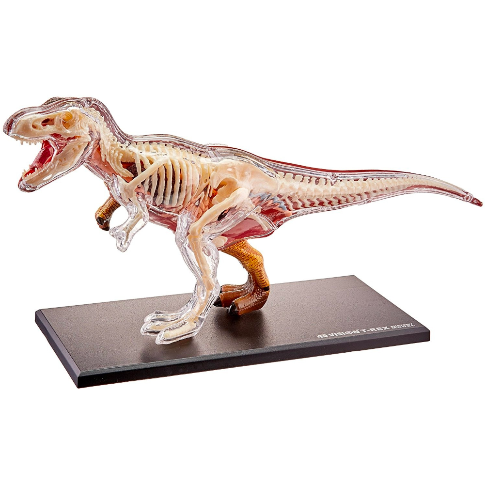Fame Master Three-Dimensional Puzzle Anatomy T-Rex 28cm