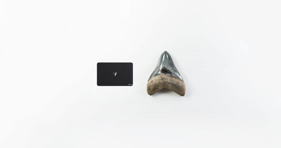 Rare Megalodon Shark Tooth. 4.44