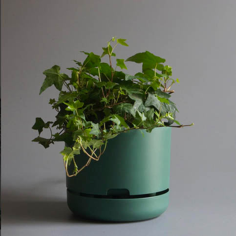 Mr Kitly x Decor Selfwatering Plant Pot - Moss Green