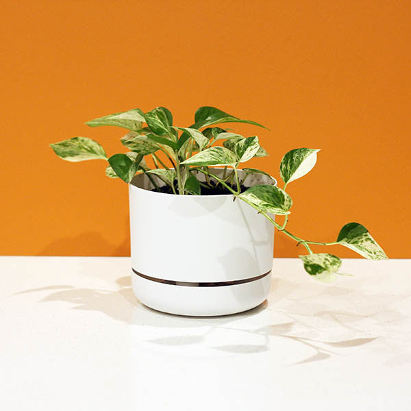 Mr Kitly x Decor Selfwatering Plant Pot - White