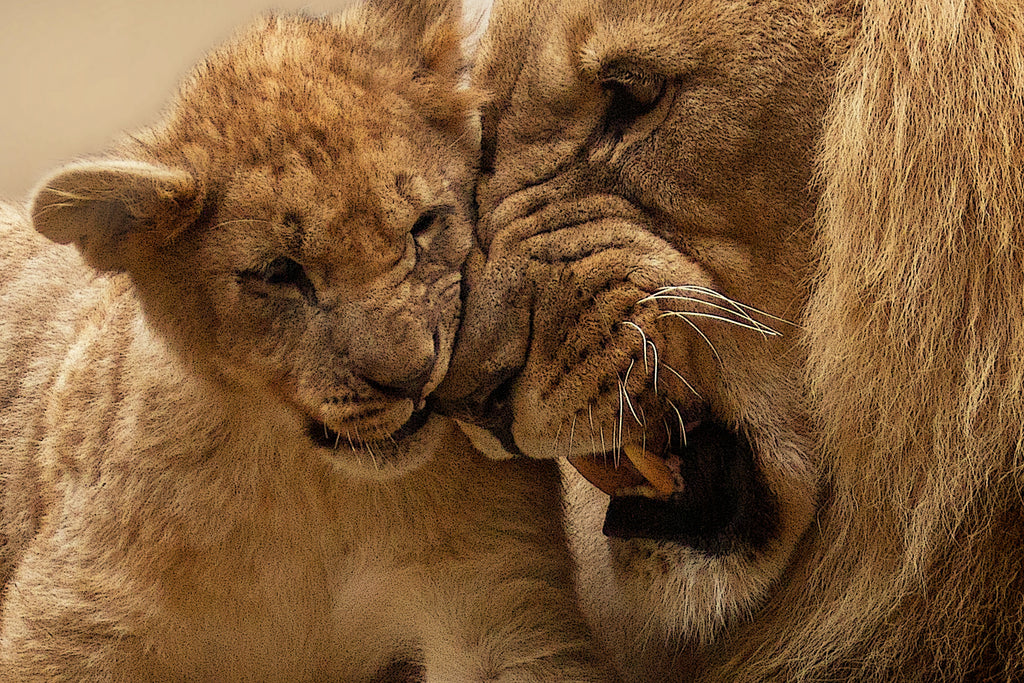 dad and lion cub growl stopping verbal abuse