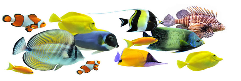 WHATS THE BEST MARINE FISH TO KEEP FOR BEGINNERS