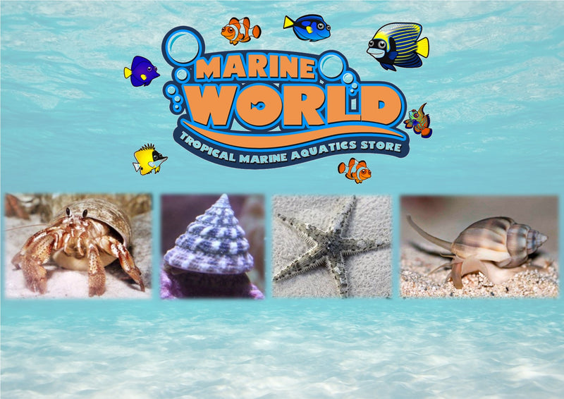 5 Turbo Snails, 10 Hermit Crabs, 5 Nassarius Snails, 1 Sand-Sifting Starfish - Marine World Aquatics
