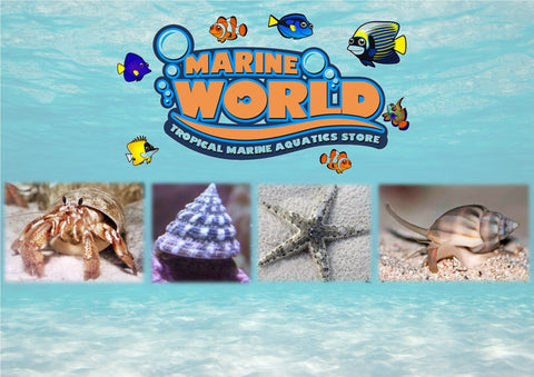 5 Turbo Snails , 5 Hermit Crabs , 5 Nassarius Snails, 1 Sand-Sifting Starfish - Marine World Aquatics