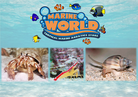 10 Hermit Crabs, 1 Cleaner Shrimp, 10 Nassarius Snails - Marine World Aquatics