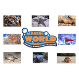 Hermit Crab Turbo Snail Fire Shrimp fish coals reef safe Cuc - Marine World Aquatics