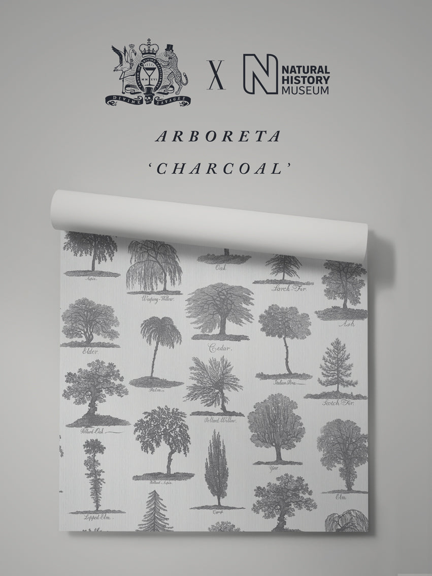Arboreta 'Charcoal' Sample