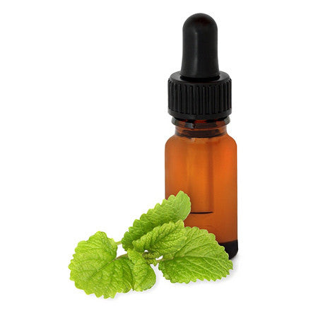 Melissa Lemon Balm in Jojoba Oil