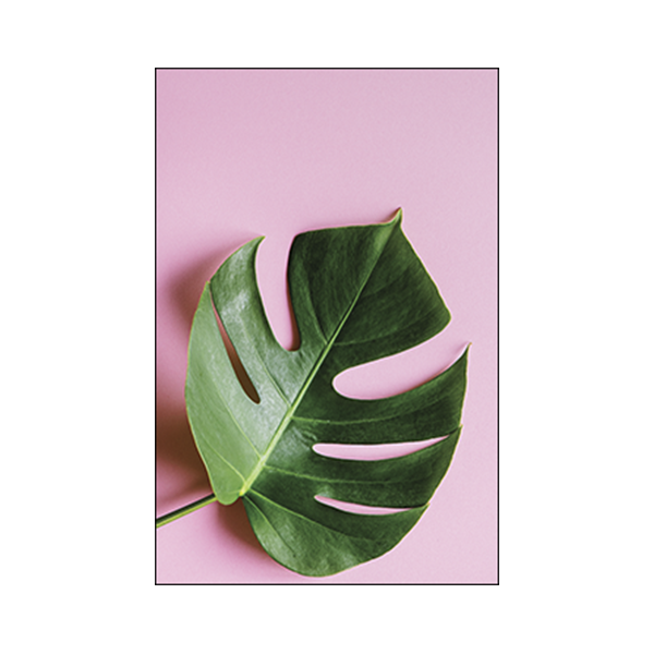 Monstera Deliciosa #1ABDE