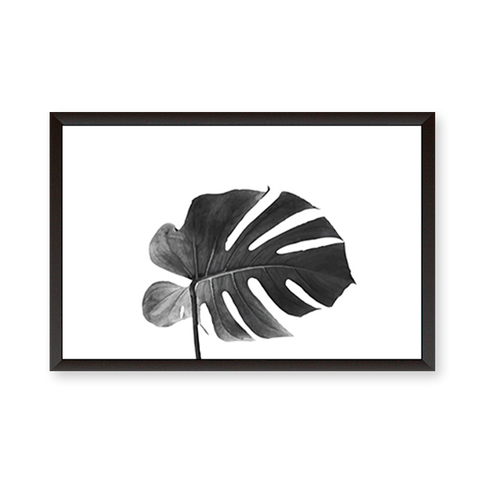 Black And White Monstera leaf