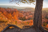 Bryce Canyon National Park Sunrise - Utah