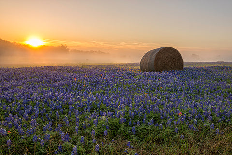 Foggy bluebonnet sunrise independence texas fine art photograph