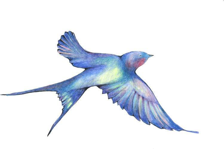 Hand drawn swallow bird in color pencil in blues, greens, yellows, and reds with its wings out to the sides flying upwards towards the right