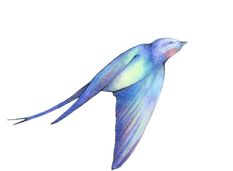 Hand drawn swallow bird in color pencil in blues, greens, yellows, and reds with its wings down by its sides flying upwards towards the right