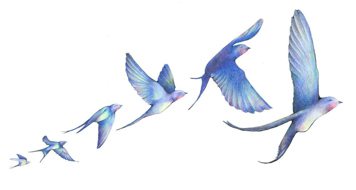 Hand drawn in colored pencil in blues, reds, yellows, and greens of a row of swallow birds flying in order shown in different flight sequences