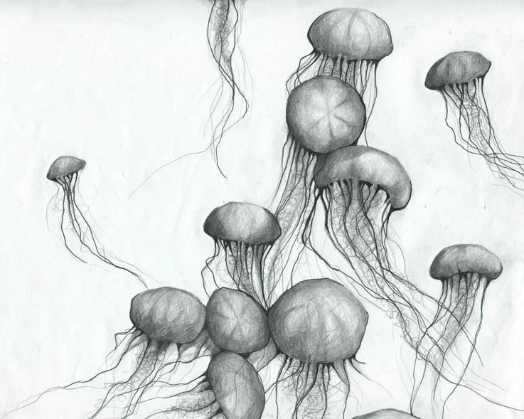 Hand drawn in pencil a cluster of jelly fish with long, thin tentacles floating in the water