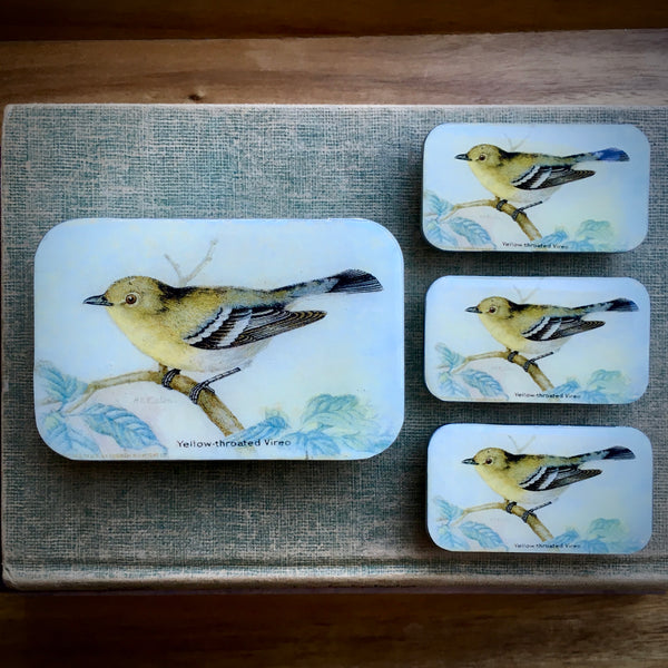 Resin Slider Tins for storage knitting notions yellow throated Vireo bird