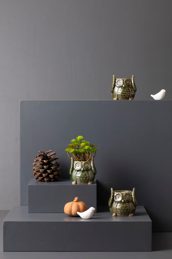 MR. OWL PLANTER