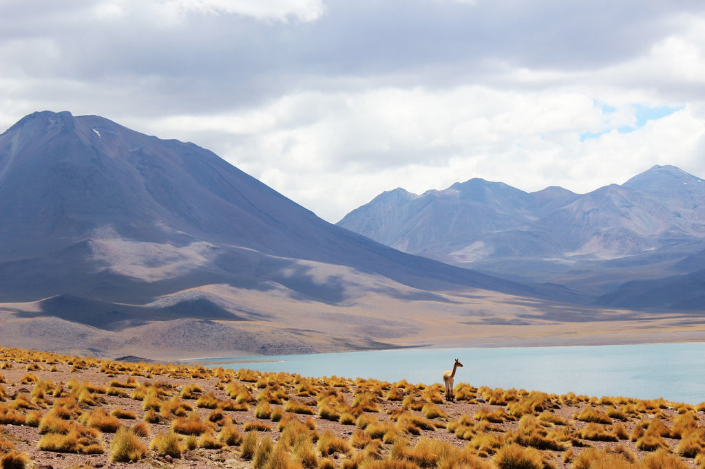 Top Ten Reasons Chile Should Be On Your Bucket List