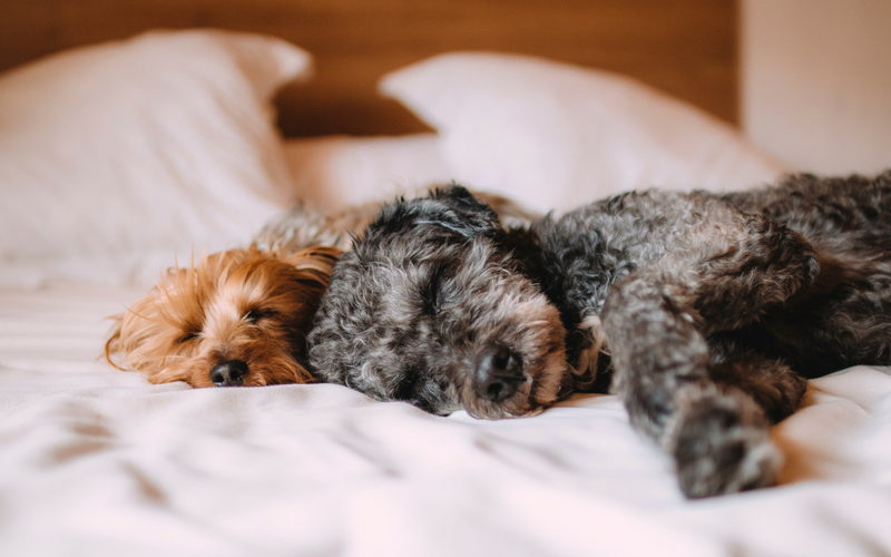 Is your dog a good sleeper?
