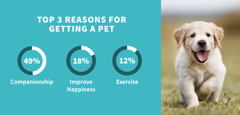 reasons for getting a pet | PetJam